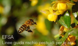 Linee guida rischio pesticidi per le api | EFSA