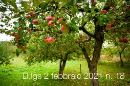Decreto Legislativo 2 febbraio 2021 n. 18