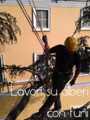 Misure di sicurezza per lo svolgimento di lavori su alberi con funi